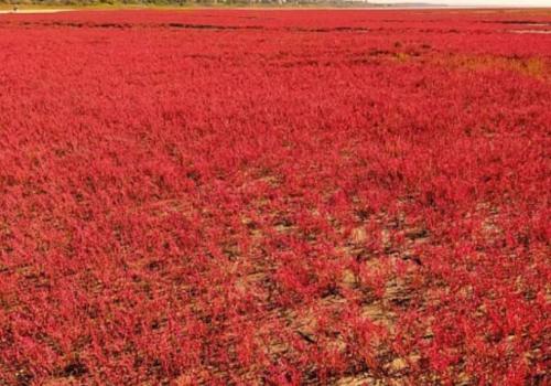 Под Анапой настало время сказочных фотосессий на фоне «марсианских» пейзажей ФОТО