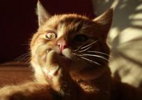 Category_cat_537699_960_720