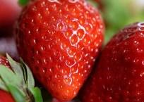 В Краснодарском крае фермеры предупреждают о «космических» ценах на клубнику и уничтожают теплицы ВИДЕО, фото — «Рекламы Кропоткина»