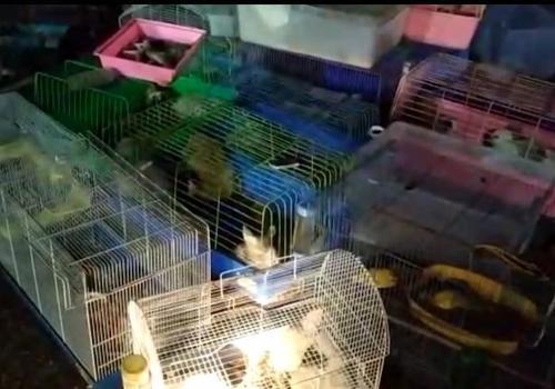 В дождливом Краснодаре загорелся зоорынок ВИДЕО