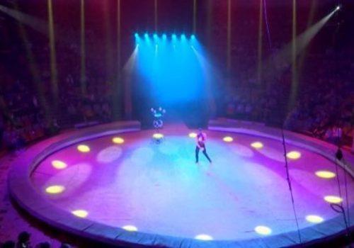 Краснодарский цирк возобновил представления