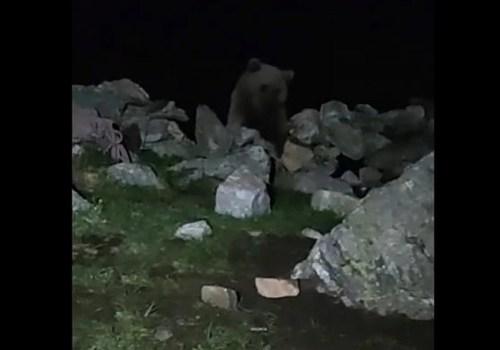 Кубанские туристы всю ночь отбивались от голодного медведя на Архызе ВИДЕО