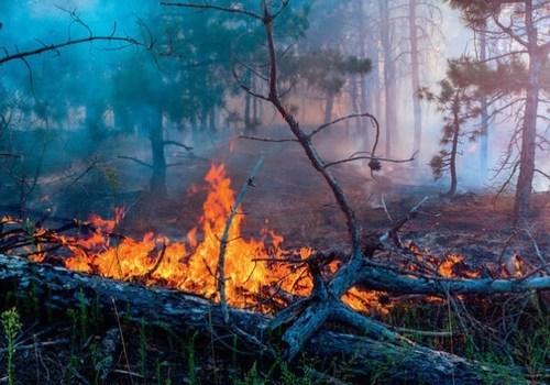 На Кубани сохраняется высокий риск возникновения пожаров