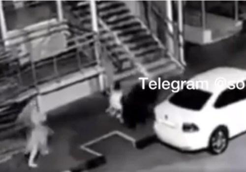 Опубликовано видео с моментом нападения стаи собак на 5-летнюю девочку в Краснодарском крае