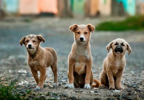 Приезжает дяденька с оружием и всех убивает: зоозащитник о бездомных животных Краснодара