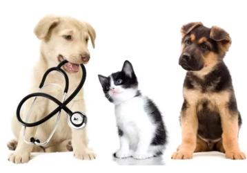 Ветеринарные клиники в Крымске - адреса, контакты, фото — «Реклама Крымска»
