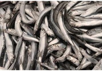 Рыба на Кубани - КРК ИП Захарчук «Керченская рыбная компания», только качественная продукция!, фото — «Реклама Краснодарского Края»