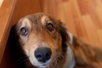 Ветеринарные клиники Геленджика, где и какие