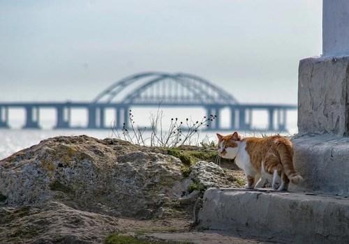 «Меняю профессию!»: Кот Мостик покидает стройку века