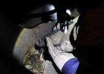 Пять севастопольских спасателей освобождали застрявшую в электрощитке кошку ФОТО, фото — «Рекламы Севастополя»