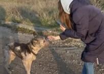 Живые скелеты и трупы щенков: в Севастополе проверили приют бездомных животных [ВИДЕО], фото — «Рекламы Севастополя»