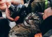 12 человек и трех котов спасли на пожаре в Севастополе ВИДЕО, фото — «Рекламы Севастополя»