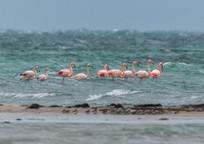 Category_flamingo_krym_ptica