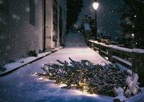 Севастопольцев приглашают сдать новогодние елки на корм осликам, фото — «Рекламы Севастополя»