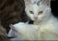 Точку поставит суд: в Севастополе хотят закрыть крупнейшую передержку для животных, фото — «Рекламы Севастополя»