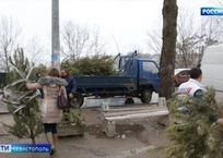 Утилизация новогодних ёлок в Севастополе продлится до конца января, фото — «Рекламы Севастополя»