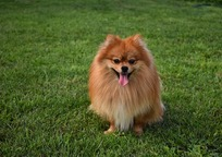 Category_dog-3619020_640