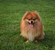 Mini_dog-3619020_640