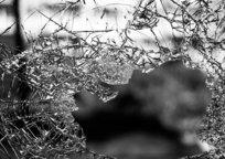 Category_glass-984457_640