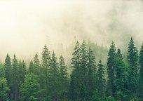Category_fog-3622519_640%20_1_