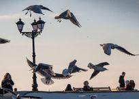 Севастополь оказался в конце рейтинга комфортных городов России, фото — «Рекламы Севастополя»