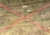 Большие белые цапли замечены в Севастополе ФОТО (Вести Крым), фото — «Рекламы Севастополя»