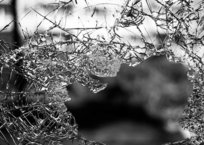 В Севастополе бдительный работник АЗС помог раскрыть преступление, фото — «Рекламы Севастополя»