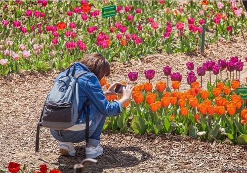 Фотофакт: В Крыму проходит восхитительный Парад тюльпанов 2021