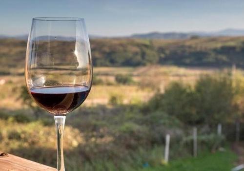 Первый в России винный парк открылся в Крыму