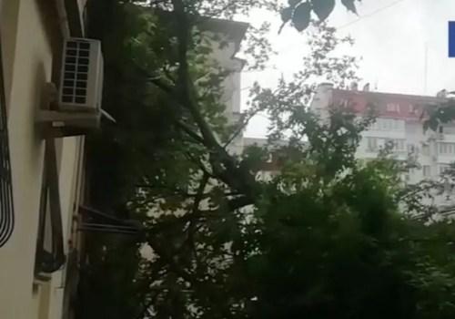 В Севастополе старое дерево упало на жилой дом ФОТО