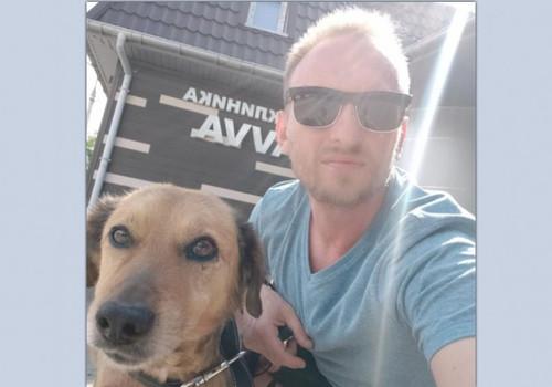 В Крыму пес с перерезанным горлом выжил и переезжает в Ялту