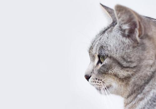 «Том и Джерри уже не те»: очевидцы опубликовали видео с котом и мышью в Крыму
