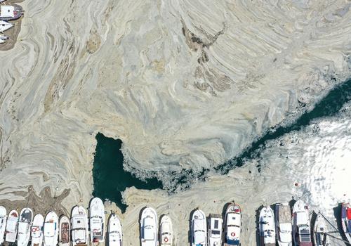 """Угрожает ли Черному морю загрязнение """"морской слизью"""" – ученый"""