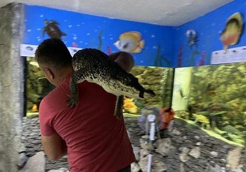 """""""Ловили руками крокодилов и змей"""": потоп в ялтинском крокодиляриуме ВИДЕО"""