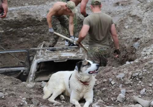 В Ялте растет количество пострадавших и размер ущерба от «библейского потопа» ВИДЕО