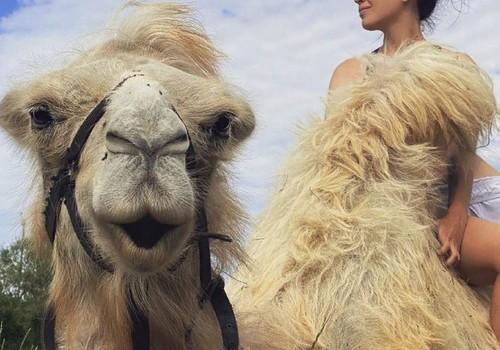 Жительницу Севастополя, спасшую верблюда, номинировали на премию «Человек с большой буквы»