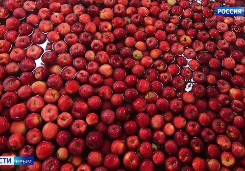 Москва и Санкт-Петербург скупают крымские яблоки