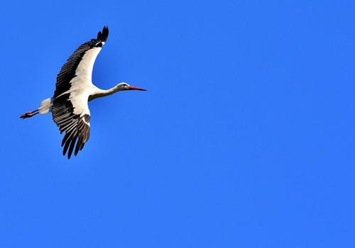 Необычная птица облюбовала побережье Крыма