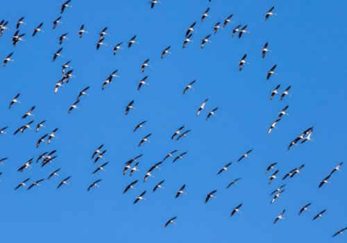 Риски ЧП с самолетами возможны в Крыму из-за сезонной миграции птиц, - источник