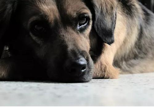 Служба спасения для животных начала работать в Севастополе: 911