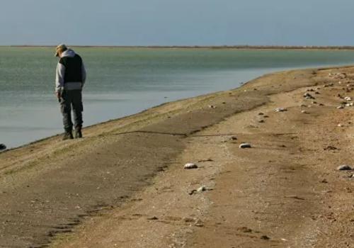 Крымский берег усеян тысячами трупов: гибель птиц на востоке полуострова