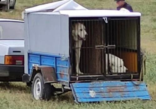 Жестокие собачьи бои проводят в одном из популярнейших мест Крыма