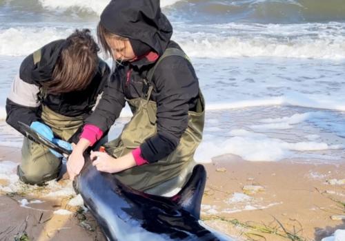 Крымская бюрократия убила краснокнижного дельфина