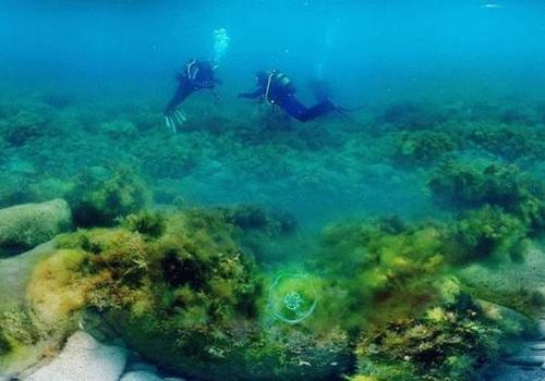 В Черном море часто находят новые виды существ