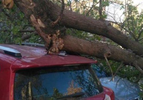 Дерево упало на три машины в Севастополе