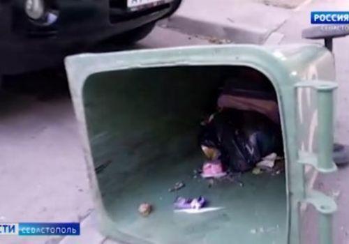 Жителей нескольких домов Севастополя атаковали крысы ВИДЕО