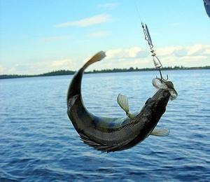 Где можно ловить рыбу в Керчи