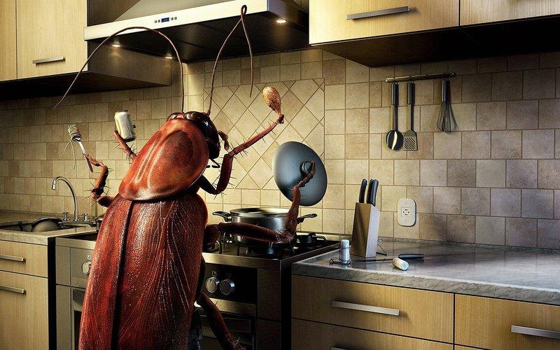 Уничтожение грызунов и насекомых.  Дезинфекция.  Продажа дез. средств