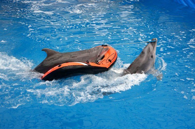 Дельфинарий в Севастополе – увлекательное шоу и плаванье с дельфинами!