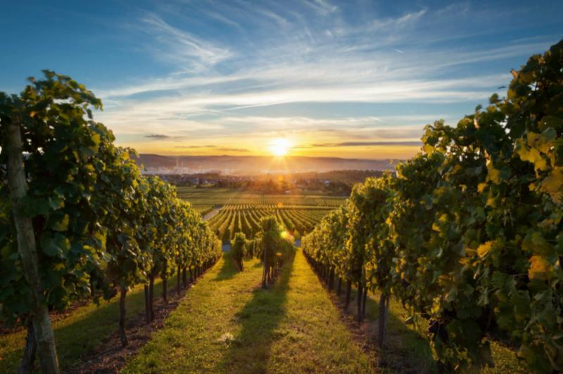 Знаменитые винодельни Крыма, которые стоит посетить каждому ФОТО
